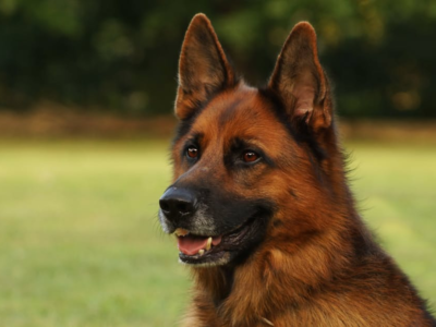 First Time Dog Owner? Here's How to Prepare