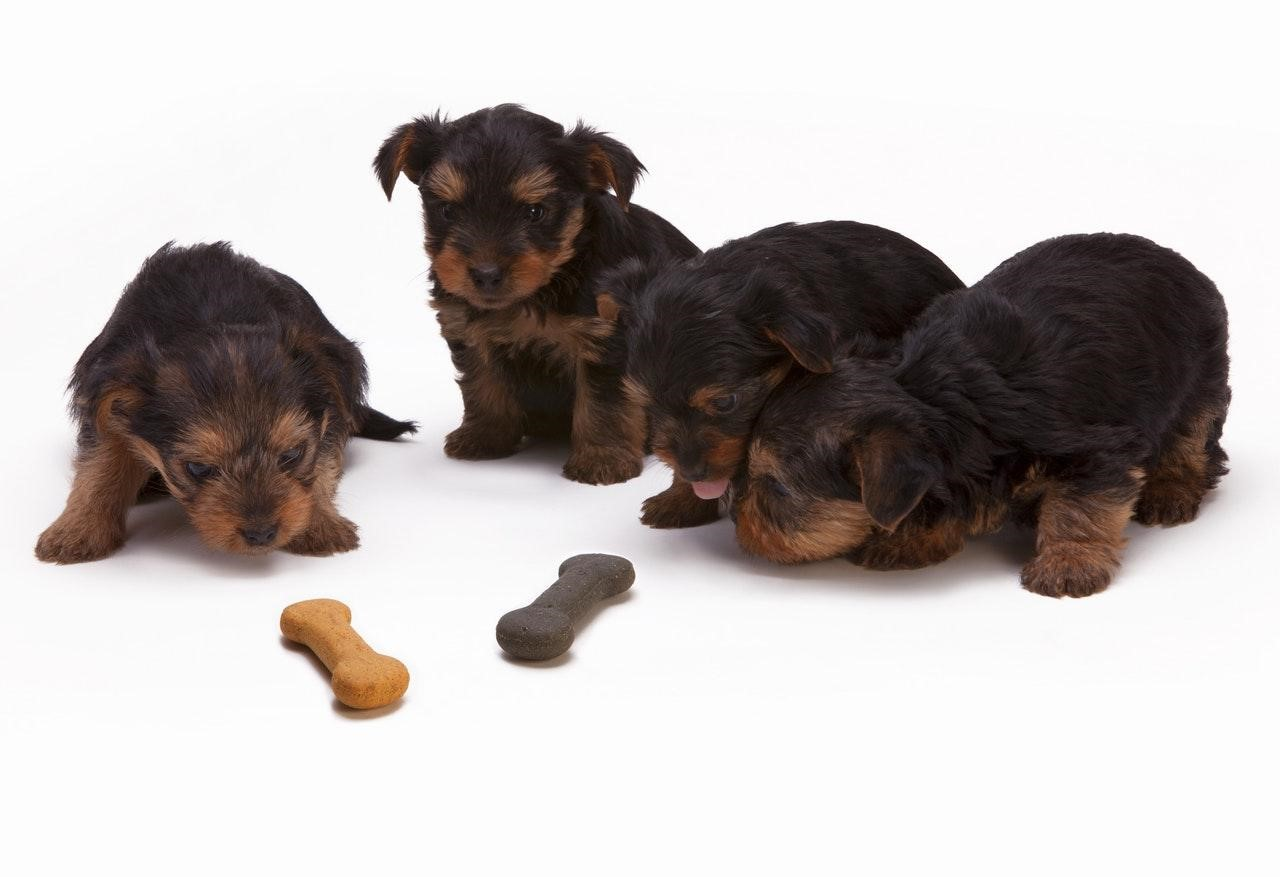 Puppies with treats