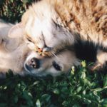 Cute cat and dog snuggling on grass