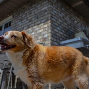 Sadie in the backyard