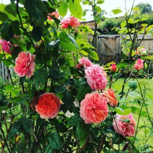 What Are The Benefits of a Garden? 1