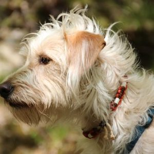 The Best Flea Collar For Dogs 3