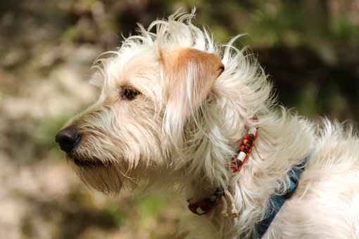 The Best Flea Collar For Dogs 4