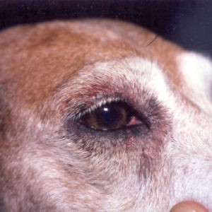 Dog with skin problems