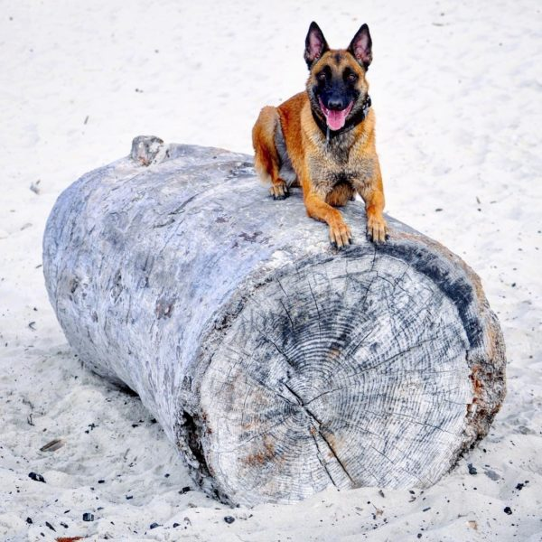 Griffin the Dog Sitting on a Log