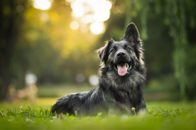 The Dog Food Digest – A Guide to Keeping Your Dog Happy and Healthy