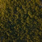 Aerial view of forest at Beacon Mountain, USA