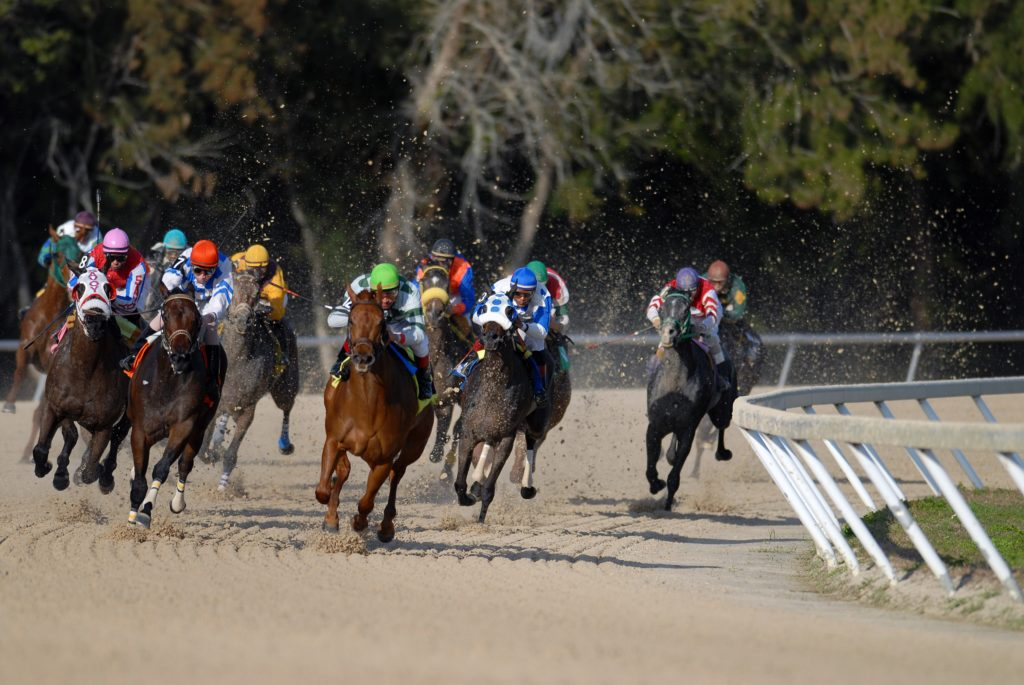 Horse race at Tampa Bay Downs