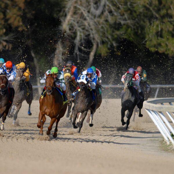 Horse race at Tampa Bay Downs