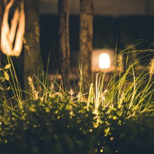 Garden at night with lights in the background