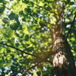 Macro shot of tree