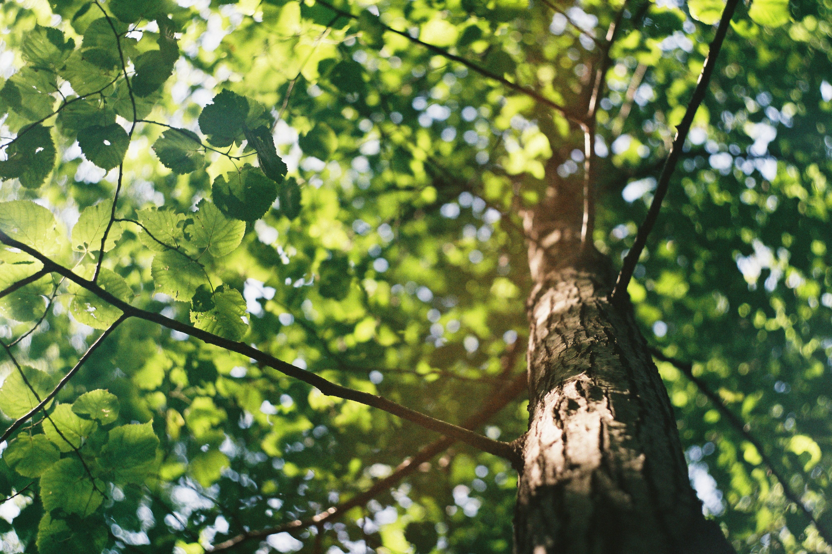 How Do You Take Care of Trees and Shrubs?