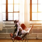 Dog sitting in chair