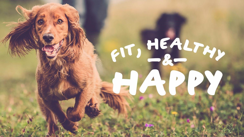 Fit, Healthy & Happy