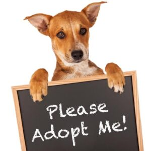 Dog holding a sign saying 'Please Adopt Me!'