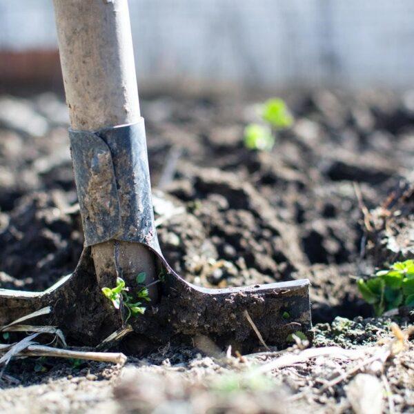 A shovel in dirt