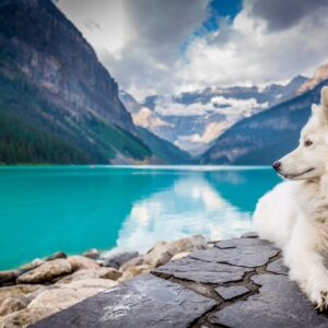 Dog in front of Lake Louise, Canada