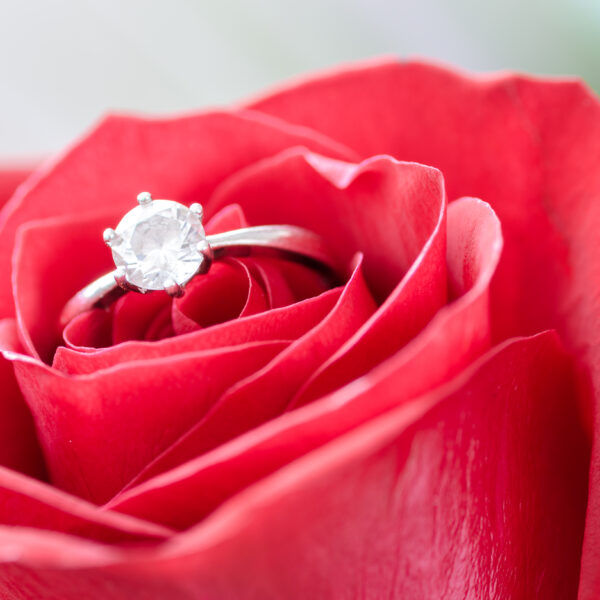Engagement ring in a rose