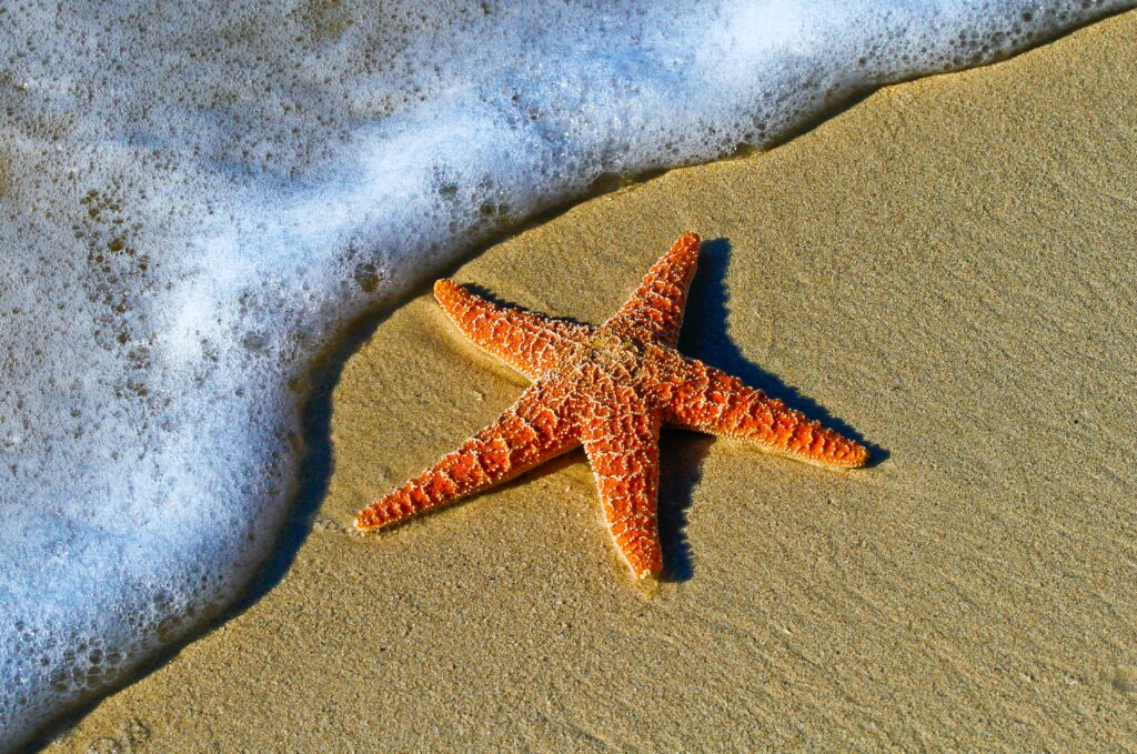 Starfish on the beach in Key West, USA