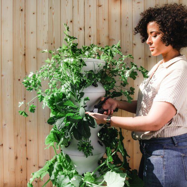 Lettuce Grow