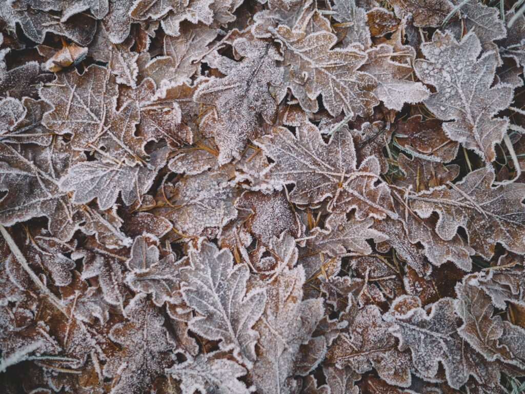 Pile of frosty leaves in Cairngorms National Park, Ballater, United Kingdom