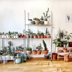 Cactuses and houseplants in pots