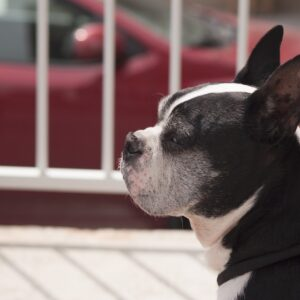 Dog in the city