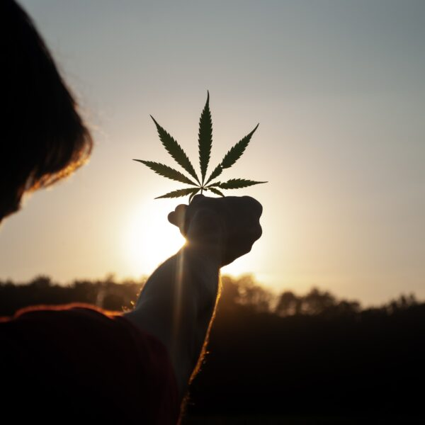 A person holding a cannabis leaf in front of a sunset