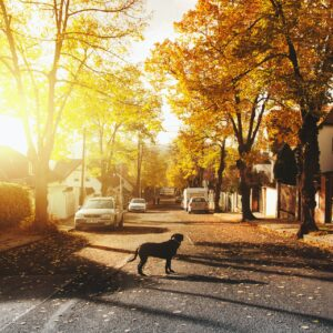 A street of houses lit up by a sunset, with a dog standing in the road